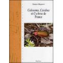 MAGUERRE - CALOSOMA, CARABUS  ET CYCHRUS DE FRANCE