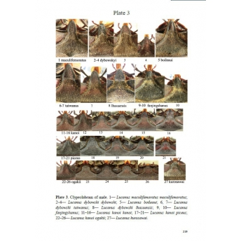 HUANG HAO, CHEN CHANG CHIN - STAG BEETLES OF CHINA I (LUCANIDAE)