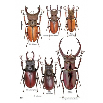 HUANG HAO, CHEN CHANG CHIN -STAG BEETLES OF CHINA II (LUCANIDAE)