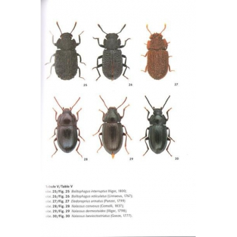 NOVAK - BEETLES OF THE FAMILY TENEBRIONIDAE OF CENTRAL EUROPE