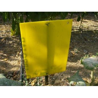 Resultado de imagen para trampas amarillas