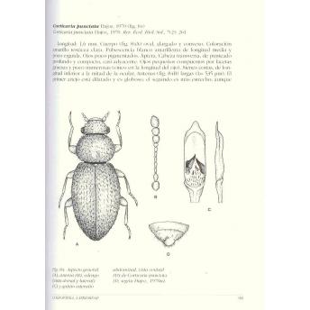 OTERO & LOPEZ - FAUNA IBERICA, Vol. 42: COLEOPTERA LATRIDIIDAE