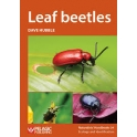 HUBBLE - LEAF BEETLES (Chrysomelidae)