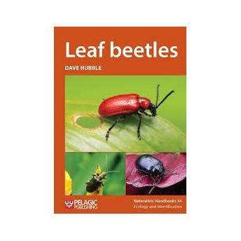 HUBBLE - LEAF BEETLES (Chrysomelidae)